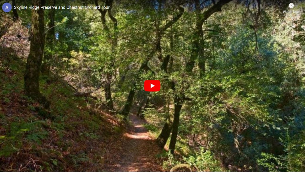 Skyline Ridge Open Space Preserve Lunch & Learn