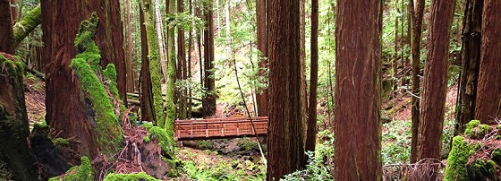 Redwood Conservation