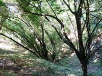 Almaden_Quicksilver_County_Park_21.JPG
