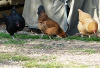 Ardenwood_Historic_Farm_19.jpg