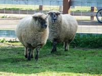 Ardenwood_Historic_Farm_27.jpg