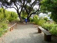 Bamboo_Garden_Los_Altos_10.JPG
