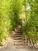 Bamboo_Garden_Los_Altos_13.JPG