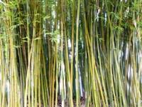 Bamboo_Garden_Los_Altos_17.JPG