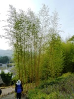 Bamboo_Garden_Los_Altos_20.JPG