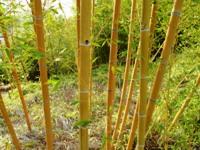 Bamboo_Garden_Los_Altos_21.JPG