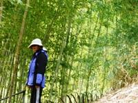 Bamboo_Garden_Los_Altos_22.JPG