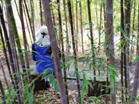 Bamboo_Garden_Los_Altos_23.JPG
