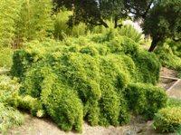 Bamboo_Garden_Los_Altos_28.JPG