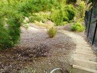 Bamboo_Garden_Los_Altos_3.JPG
