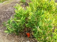 Bamboo_Garden_Los_Altos_4.JPG