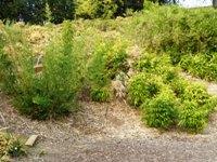 Bamboo_Garden_Los_Altos_5.JPG