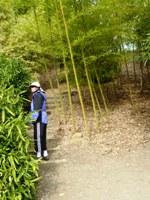 Bamboo_Garden_Los_Altos_7.JPG