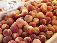 Belmont_Farmers_Market_12.jpg