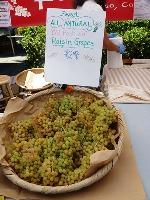Belmont_Farmers_Market_14.jpg