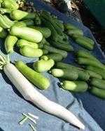 Belmont_Farmers_Market_19.jpg