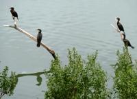 Lake_Chabot_Marina_Park_27.JPG