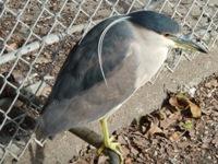 Lake_Merritt_Wildlife_Full Review_10.jpg