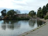 Lake_Merritt_Wildlife_Full Review_3.jpg