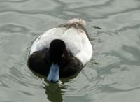 Lake_Merritt_Wildlife_Full Review_5.jpg
