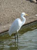 Lake_Merritt_Wildlife_Full Review_7.jpg