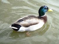 Lake_Merritt_Wildlife_Full Review_8.jpg