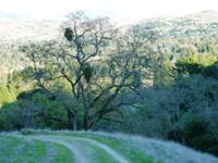 Las_Trampas_Regional_Wilderness_12.jpg