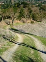 Las_Trampas_Regional_Wilderness_5.jpg