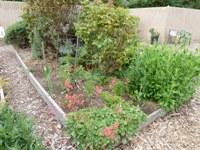 MountainView_SrCenter_Community_Garden4.jpg