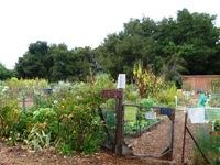 Palo_Alto_Community_Garden_2.JPG