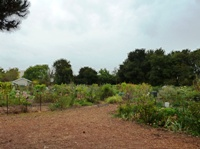 Palo_Alto_Community_Garden_3.JPG