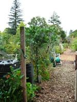 Palo_Alto_Community_Garden_4.JPG