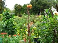 Palo_Alto_Community_Garden_5.JPG