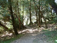 Purisma_Creek_Redwoods_10.JPG