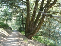 Purisma_Creek_Redwoods_11.JPG