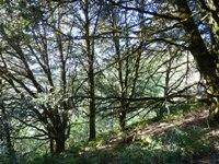 Purisma_Creek_Redwoods_13.JPG