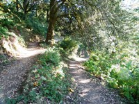 Purisma_Creek_Redwoods_14.JPG