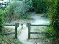 Purisma_Creek_Redwoods_17.JPG