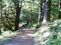 Purisma_Creek_Redwoods_18.JPG