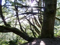Purisma_Creek_Redwoods_19.JPG