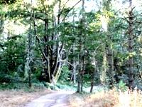 Purisma_Creek_Redwoods_20.JPG