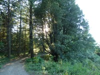 Purisma_Creek_Redwoods_21.JPG