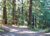 Purisma_Creek_Redwoods_22.JPG