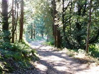 Purisma_Creek_Redwoods_23.JPG