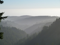 Purisma_Creek_Redwoods_26.JPG