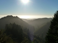Purisma_Creek_Redwoods_27.JPG