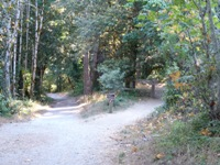 Purisma_Creek_Redwoods_5.JPG