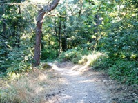Purisma_Creek_Redwoods_6.JPG