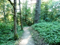 Purisma_Creek_Redwoods_7.JPG