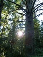Purisma_Creek_Redwoods_8.JPG